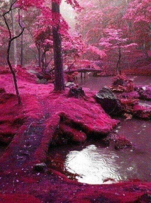 bosque rosa de hadas en irlanda