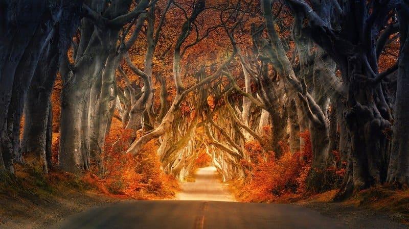 bosque irlanda magico