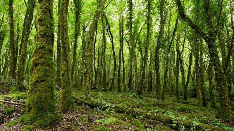 bosque verde de irlanda