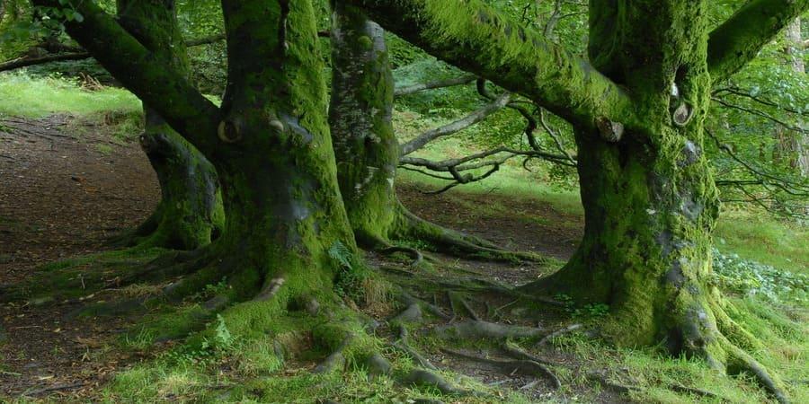 bosques de Irlanda