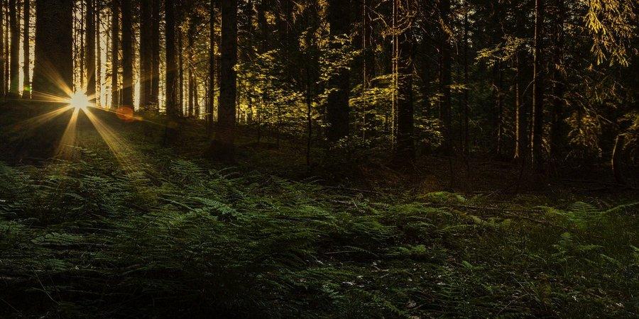 Irlanda posee bosques espectaculares