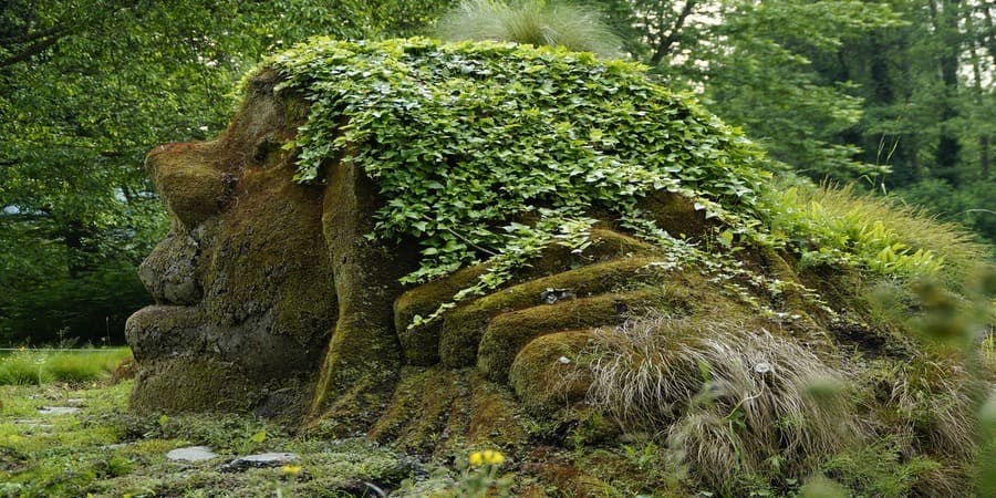 guaria de los duendes en los bosques irlandeses