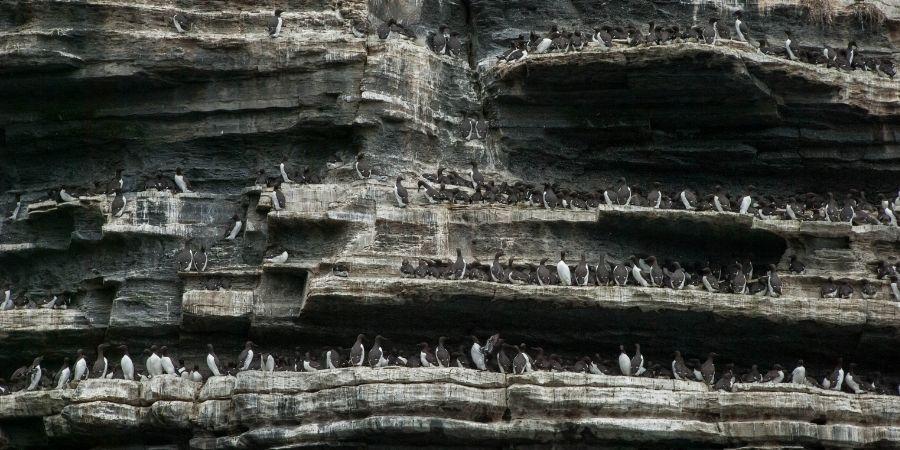 Acantilados-Moher y su fauna
