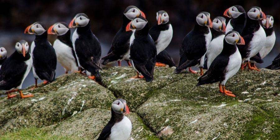 Acantilados-Moher un espacio ideal para el hábitat de aves