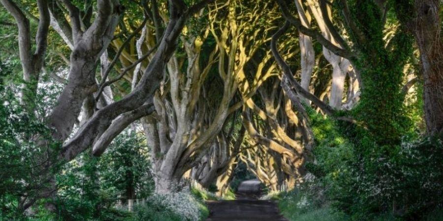 Irlanda del norte camino de Setos Oscuros