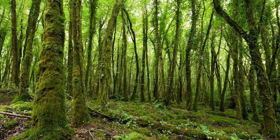 La cultura celta esta relaciona con la naturaleza.