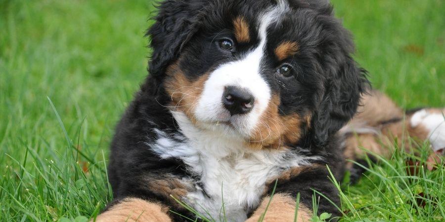 Los perros han estado en la tierra irlandesa desde los años prehistoricos.