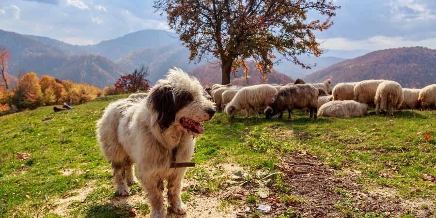 Los perros del campos tienen nombres entre los celtas.