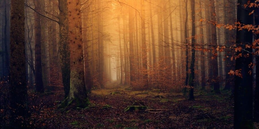 la magia celta trata de enaltecer la naturaleza